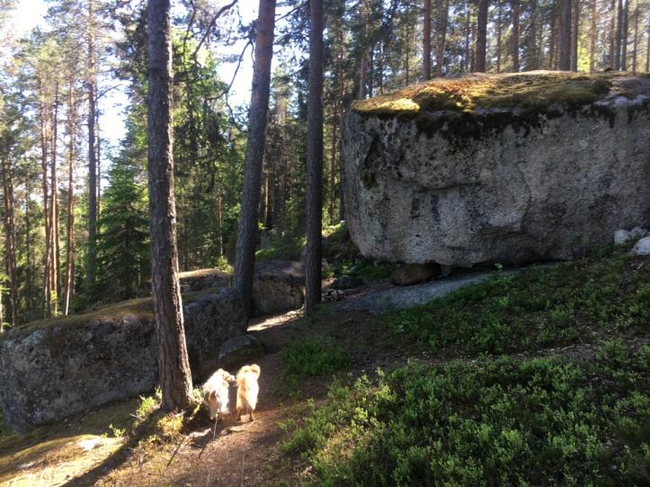 Hyyppäänvuori
